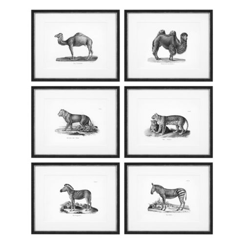 Eichholtz Prints Historical Animals set of 6 * Black wooden frame | clear glass